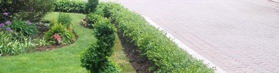 Landscaping Maintenance New York